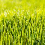 Посадка газонной травы и уход за ней на дачном участке